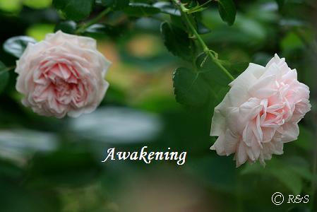 アウェイクニング302IMG_6891