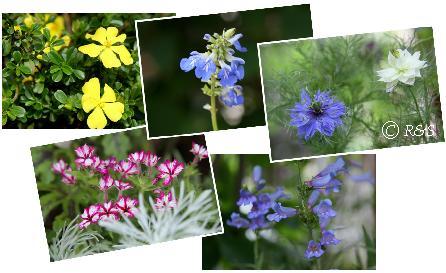 花壇の花1