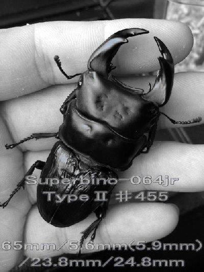 064204552001orz.jpg