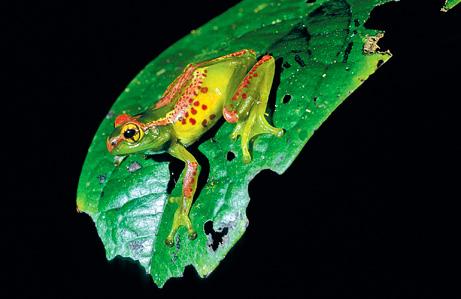 090505-01-new-amphibians-frog_big.jpg