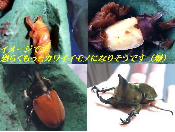kofukipure01