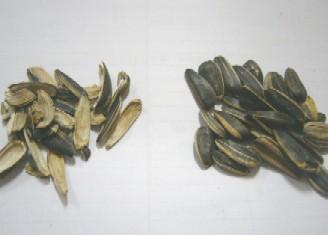 タネおよび殻