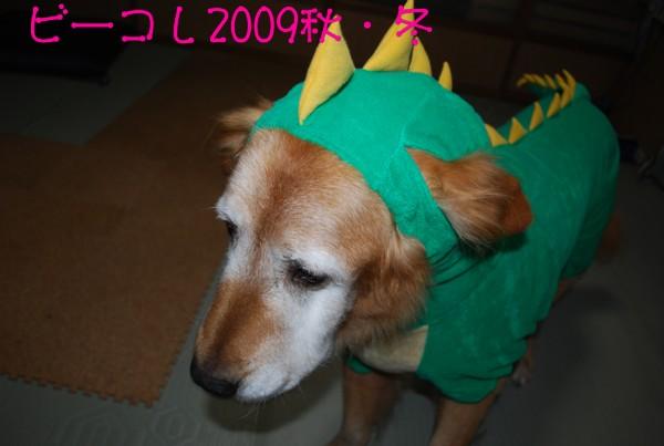 2009.11.09-8
