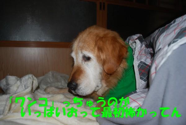 2009.11.22-5
