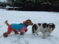 雪を走る⑤