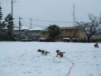 雪を走る④