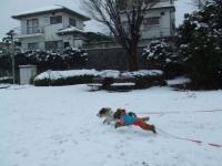 雪を走る③