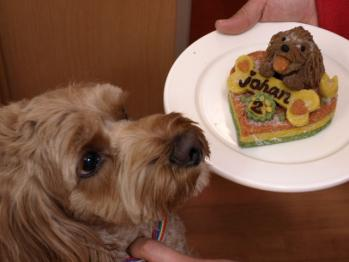 Birthケーキとjohan