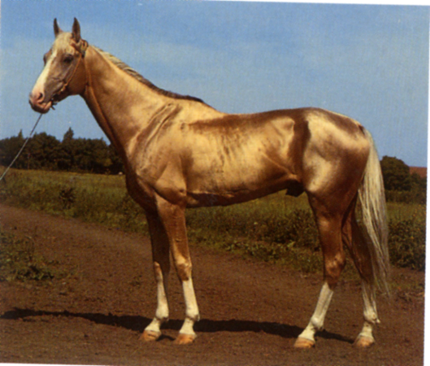 INFORMATION 黄金の馬