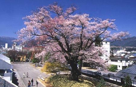yasutomi1.jpg