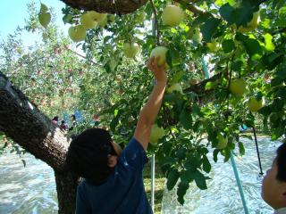 りんご狩り_1