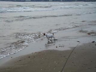 海は怖くて入れない