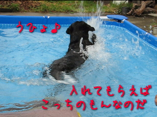 20080814_4.jpg
