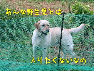 20080814_5.jpg