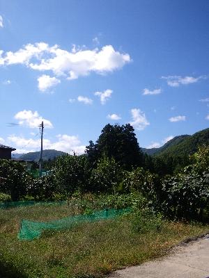 20081002_1.jpg