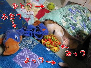 20081006_1.jpg