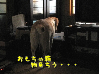20081006_21.jpg