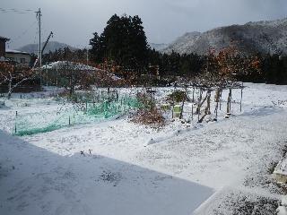 20081226_1.jpg