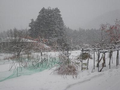 20081227_1.jpg