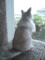 猫毛10.植毛1