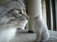 猫毛12植毛3横顔と一緒