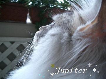 ジュピ横顔
