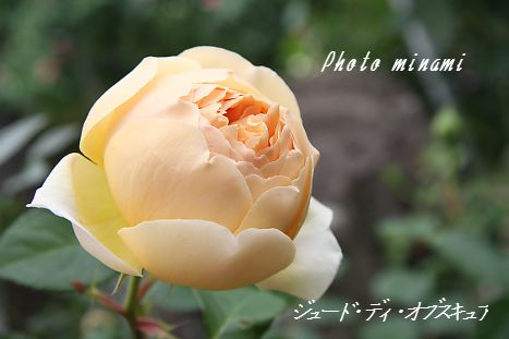 s_066_20090604141807.jpg