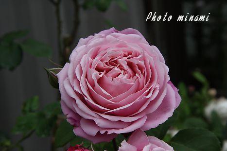 s_s_009_20090602122231.jpg