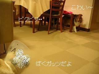 200810316-a.jpg