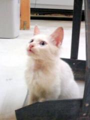 20081107185333s白猫さん