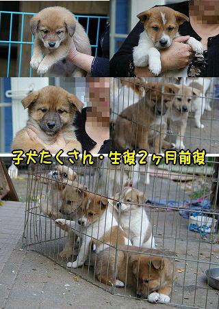 081105-11 子犬たち