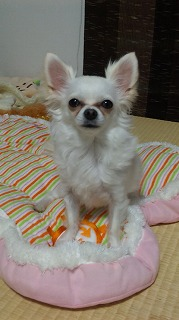 20090216シホちゃん1
