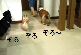 2009061332.jpg