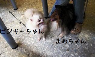 20090701104.jpg