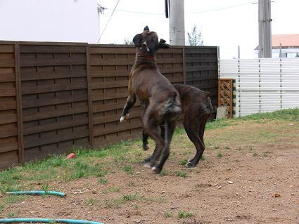 馬かティン