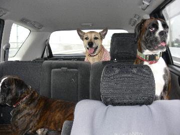 車の楽しい3人組