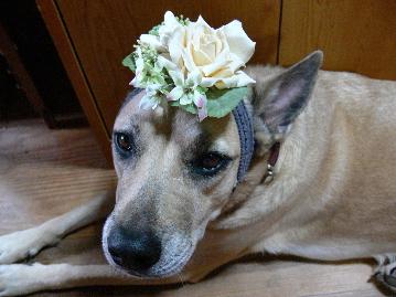 7歳お花のルン