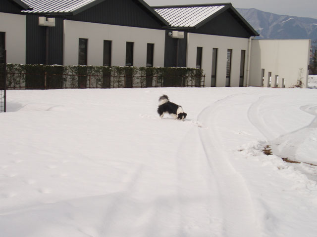 こっちは雪だ~