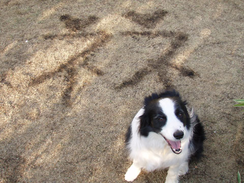 芝を焼いて落書き