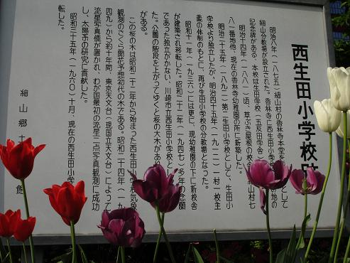 shinyuri765.jpg