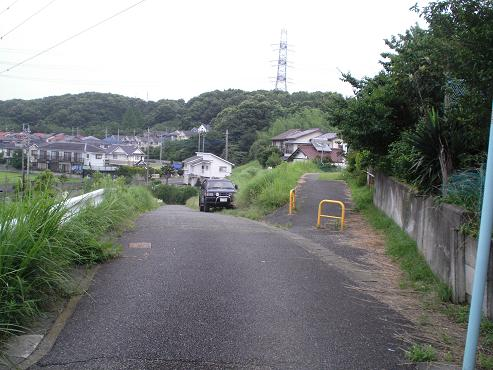 shinyuri981.jpg