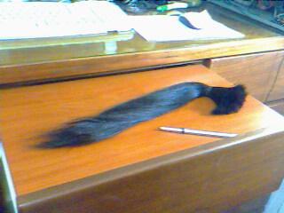 20090306 頭髮 02
