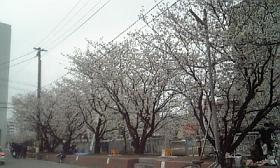 20090326.jpg