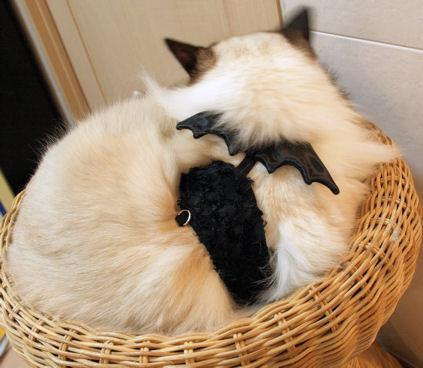 寝てる悪魔の羽。