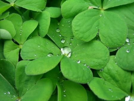 葉と水滴_20090423