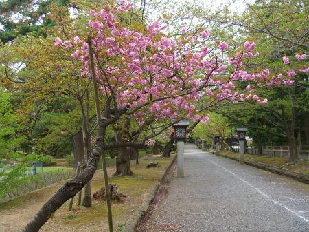 弥彦公園の入口_20090424