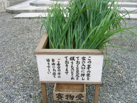 弥彦神社で茅の配布20090630