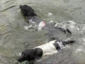別々の方向に泳ぐ
