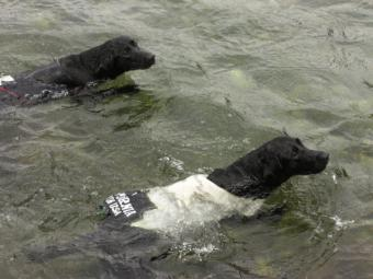 2匹で仲良く泳ぐ