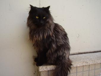 この猫です